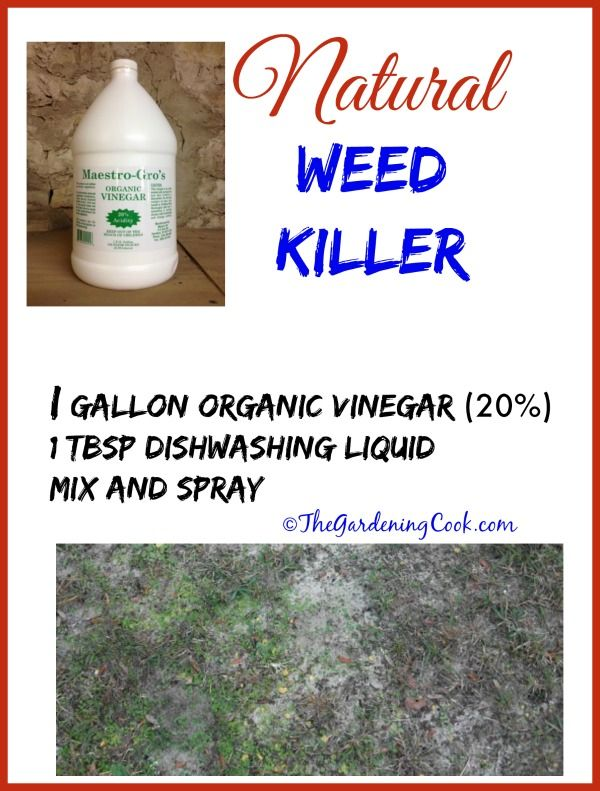 White Vinegar Weed Killer is a perfect alternative to Roundup. It is cheaper, much more organic and easy to use. Find out how in this article.