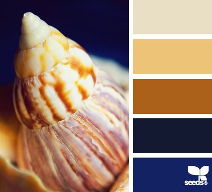Another palette outside my comfort zone. Look how the dark blue brings out the caramel colors of the shell.
