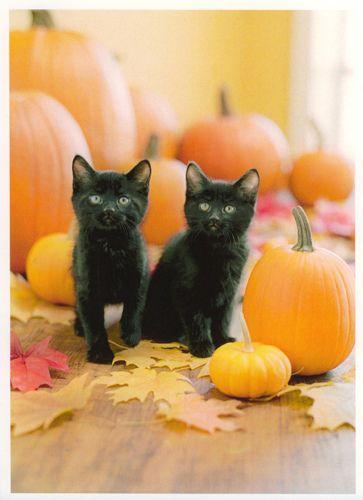 spooky?: Black Kitty, Halloween Kitty, Baby Halloween, Black Kittens, Blackcat, Black Cat Pumpkin, Halloween Kittens, Happy Halloween, Halloween Cat
