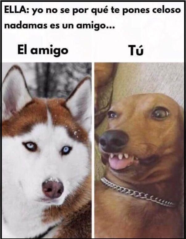 El Es Solo Un Amigo Https Www Yoalucino Com Animales El Es Solo Un Amigo Memes Divertidos Memes Divertidos Sobre Perros Memes Perros
