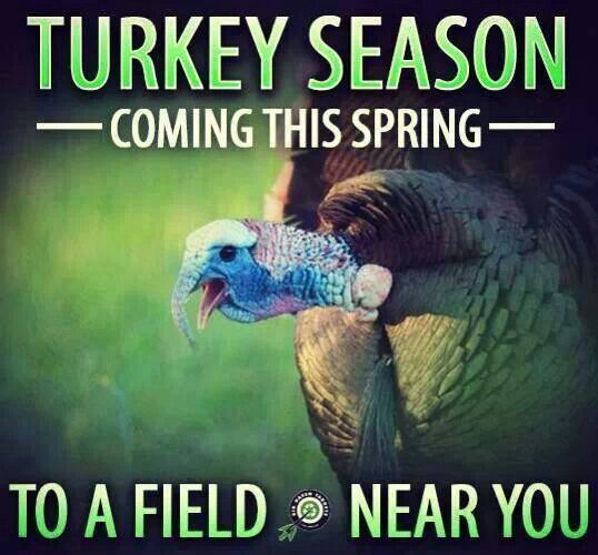 1000+ images about Hunting: Wild Turkeys on Pinterest ...