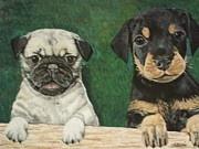 Pug and Doberman Pups
