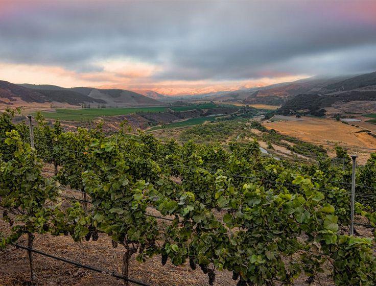 Santa Barbara area is fast becoming a wine destination with the Santa Maria, Los Alamos, and Santa Ynez Valleys, and Santa Rita Hills all offering different microclimates that produce distinctive grape varietals.