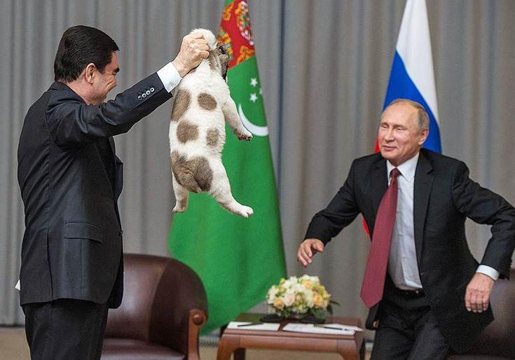 11 октября 2017 года президент Туркмении Гурбангулы Бердымухамедов в ходе встречи в Сочи подарил Владимиру Путину щенка породы туркменский алабай