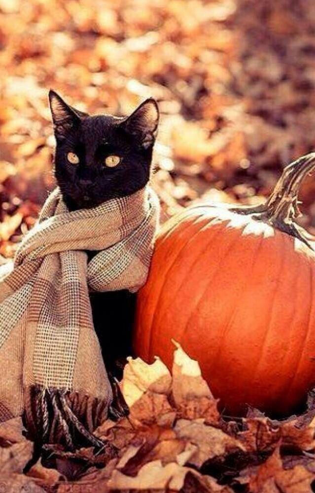 Картинка кота в осени с надписью