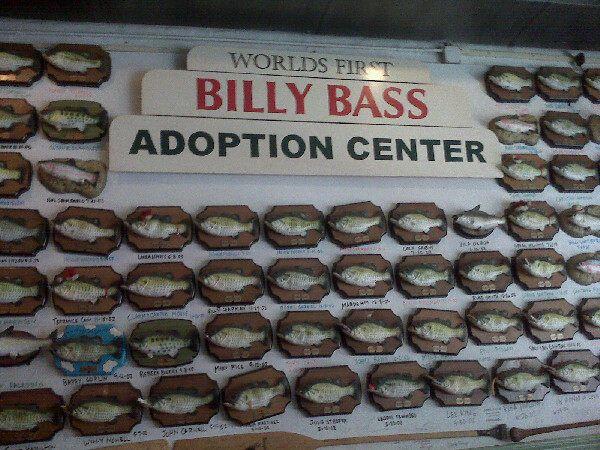 Billy Bass Adoption Center – Little Rock, Arkansas - Atlas Obscura