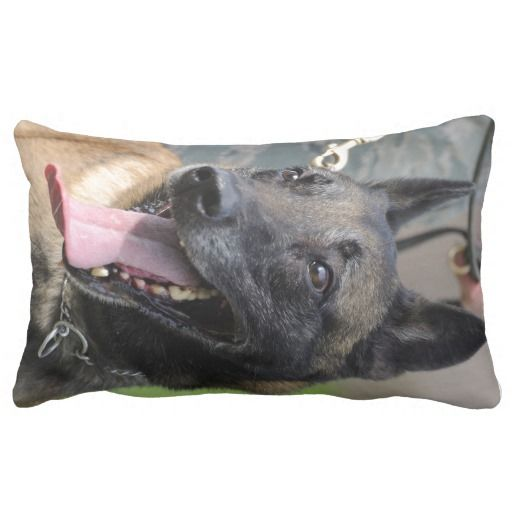 >>>This Deals          	Smiling Belgian Malinois Dog Pillow           	Smiling Belgian Malinois Dog Pillow today price drop and special promotion. Get The best buyShopping          	Smiling Belgian Malinois Dog Pillow Review from Associated Store with this Deal...Cleck Hot Deals >>> http://www.zazzle.com/smiling_belgian_malinois_dog_pillow-189859741703999204?rf=238627982471231924&zbar=1&tc=terrest