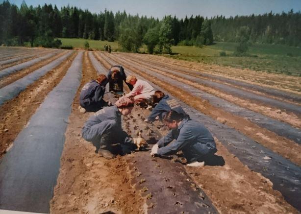 At work in Frantsila Organics herb farm (1994?) Hämeenkyrö