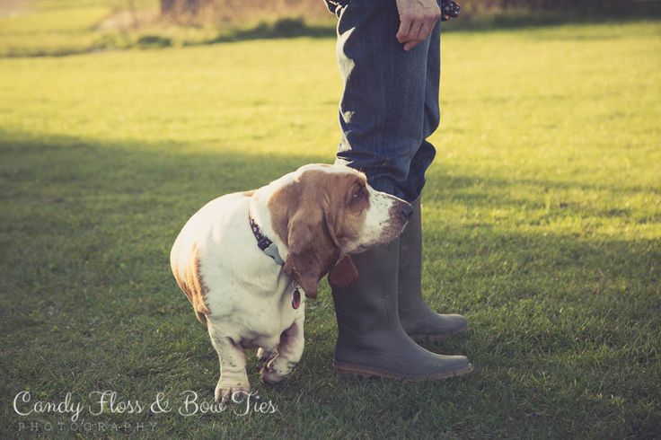 Basset Hound Photoshoot in Worthing, West Sussex by Candy Floss & Bow Ties Photography.