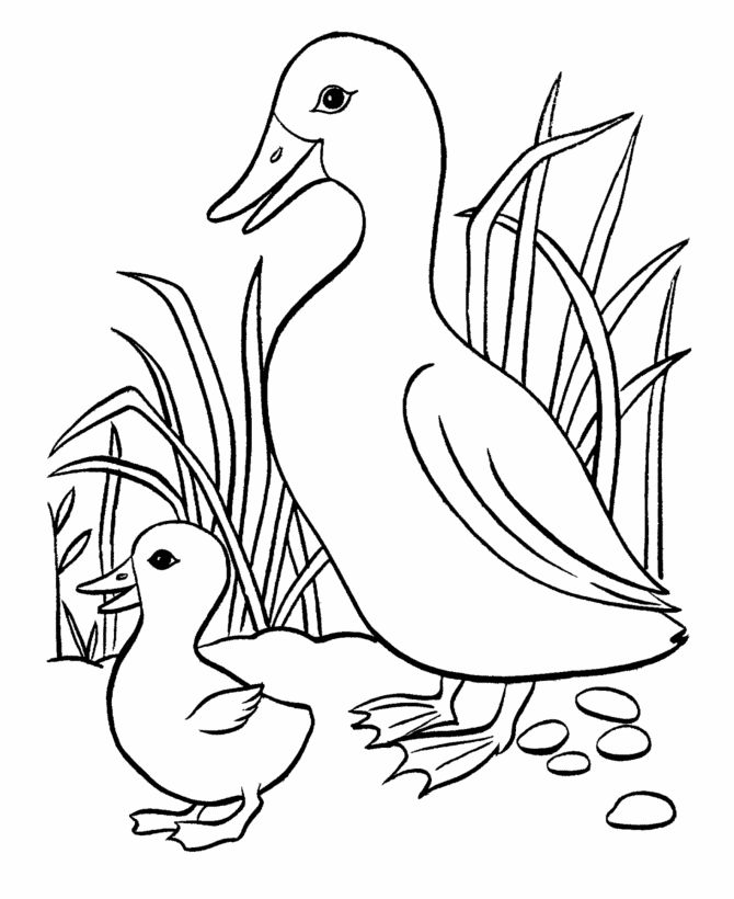 BlueBonkers: Easter Ducks Coloring Page Sheets - 14 - Easter mother duck and her cute baby coloring pages