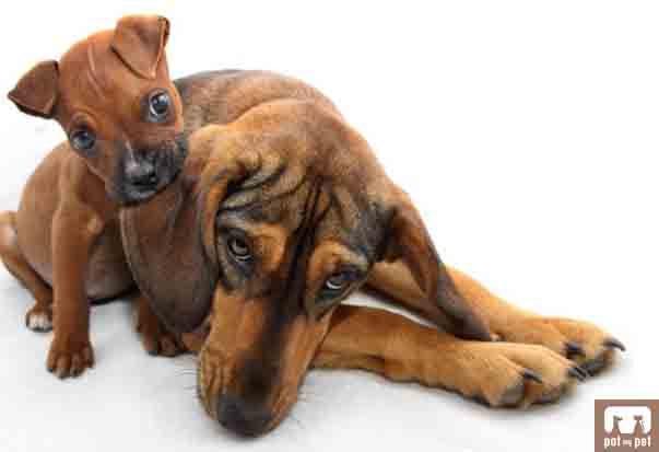 Puppy Biting Older Dogs Legs