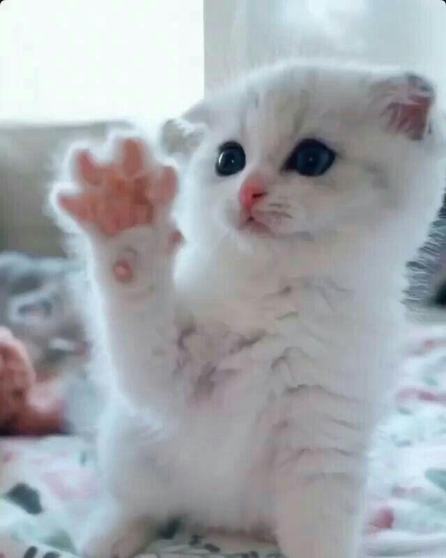 Pin By Azan Ali On Cat S Love Cute Cats Cute Baby Animals