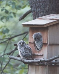 I would love to make this Barred Owl box, but where would a three foot tall bird house go?