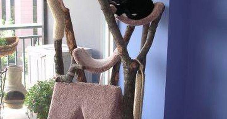 Como fazer uma casa da árvore para gatos. Traga o exterior para dentro de casa para o seu gato fazendo-lhe uma casa na árvore. Cheia de brinquedos e sons de pássaros cantando, esta casa de árvore irá fornecer o seu gato horas de diversão. Os gatos gostam de estar acima de tudo. Eles são especialmente atraídos pelo movimento e os sons da presa. Gatos que vivem dentro de casa muitas vezes ...