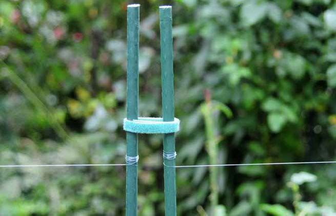 57 best garden pests images on pinterest deer fence for How to keep deer out of garden fishing line