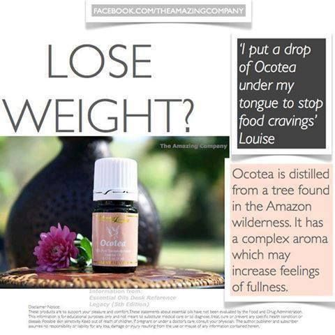 Young Living Ocotea Essential Oil Weight Loss For more information you can contact me at denise.stell@yahoo.com or to purchase http://www.youngliving.com/signup/?isoCountryCode=US&sponsorid=1671364&enrollerid=1671364