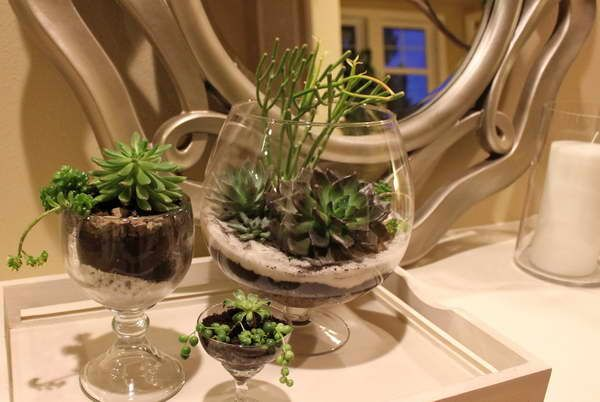 Tropical Terrarium Plants With Mirror Glass