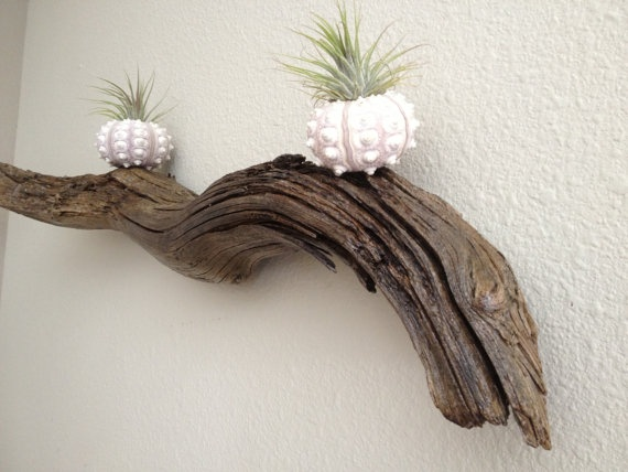 Wall Decor With Photos Pinterest : Driftwood wall decor laramichellemakings