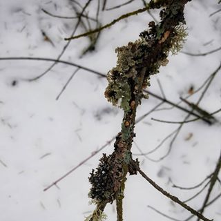 Its a simple thrill, but to see a branch not covered with snow right now gives me flutters...  .  .  .  .