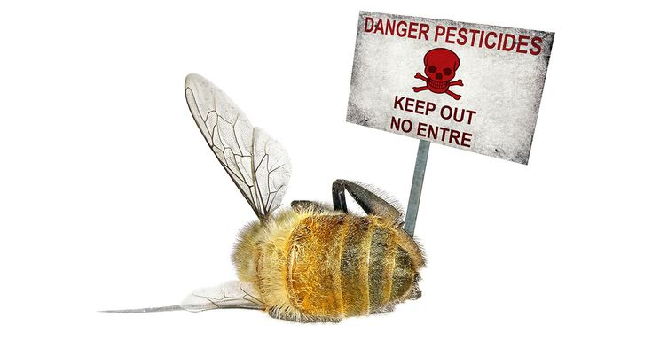 Years ago, Gaia Health informed that bee dieoffs are a direct result of pesticide nerve agents called neonicotinoids.