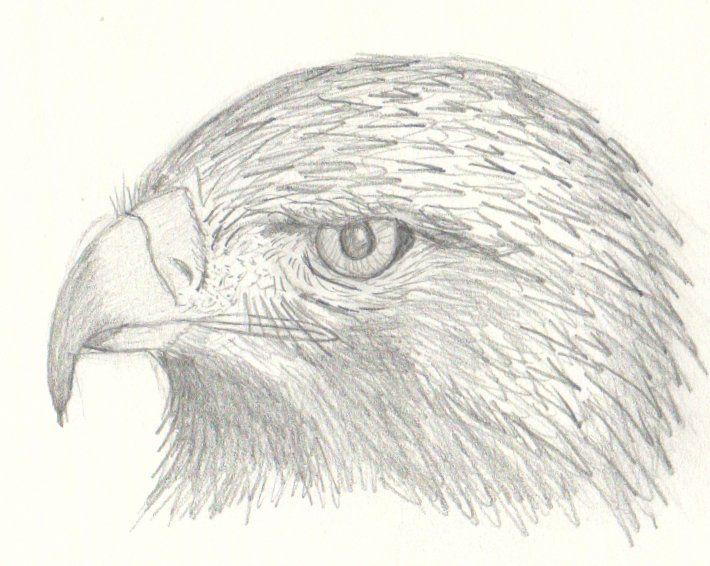Portrait Au Crayon D Aigle Royal Dessin Coloriage Oiseaux