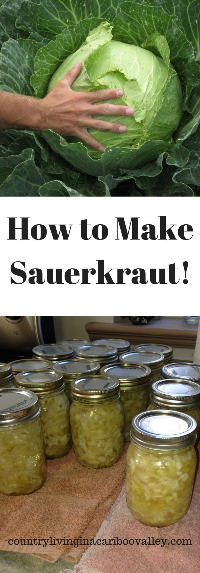 Make your own Sauerkraut using this recipe and easy process!