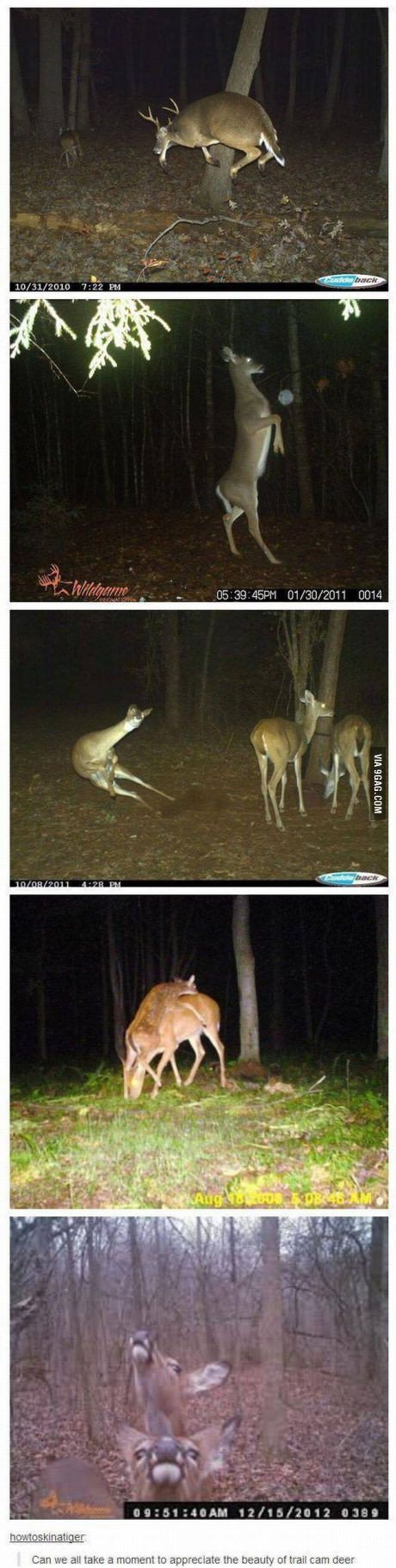 Deer are weird as f**k.. About that time again!