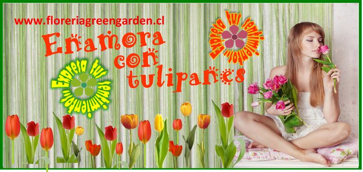 http://www.floreriagreengarden.cl/arreglos-tulipanes.php