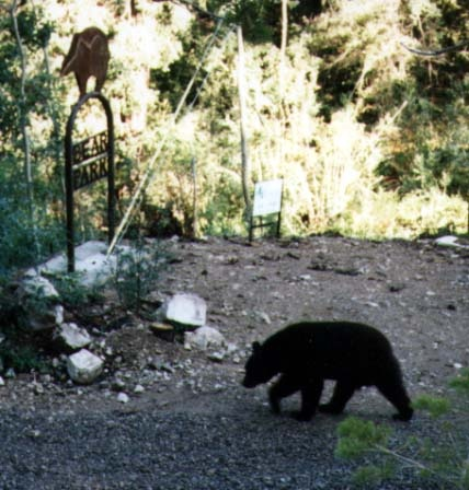 31 Best Images About My Cloudcroft New Mexico Where My Heart Is