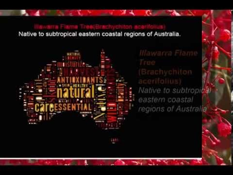 Illawarra Flame Tree is not only a gorgeous red colour, with petite little bell shaped flowers that makes my heart sing. It is also full of amazing chemical properties that revitalize the skins appearance. Find out more about this native Aussie beauty. www.nativenaturalskincare.com.au