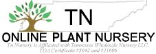 Tennessee Wholesale Nursery is an Online Plant!