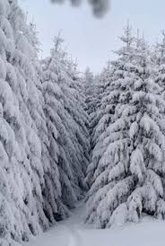 Image result for PICTURES snow laden ponds in winter