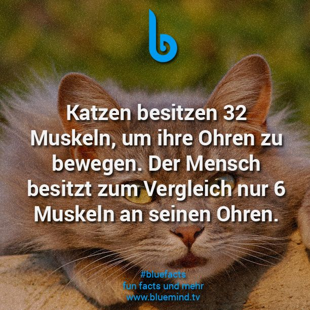 #bluefacts #katzen #cats #fakten #animal