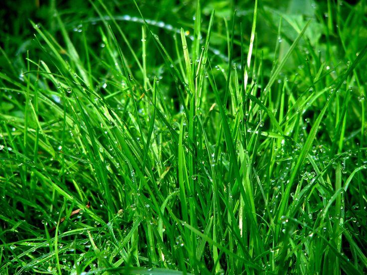 Najpiękniejsze ogrody – trawa ozdobna do ogrodu, trawa dekoracyjna, trawnik #trawa #trawnik #trawa #ozdobna #ogród #ogrody #ogrodnictwo #zielen #trawka #pomyslu #aranzacje #zdjecia #ogrodu #piekne #najpiekniejsze #garden #gardeners #grass #flower #ideas #summer #spring #best #photos #photo #picture #green #house #home #decor #pampasowa