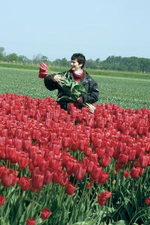 Tulipa 'Sky High Scarlet' - Tulip Bulbs for sale
