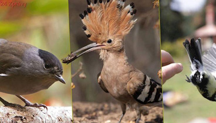 Arboretum kroužkovací stanice Národního muzea: Na okraji metropole se ukrývá ptačí ráj