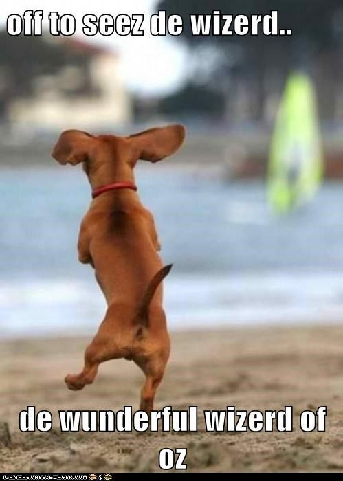 cute daushund meme | Recaption See All Captions