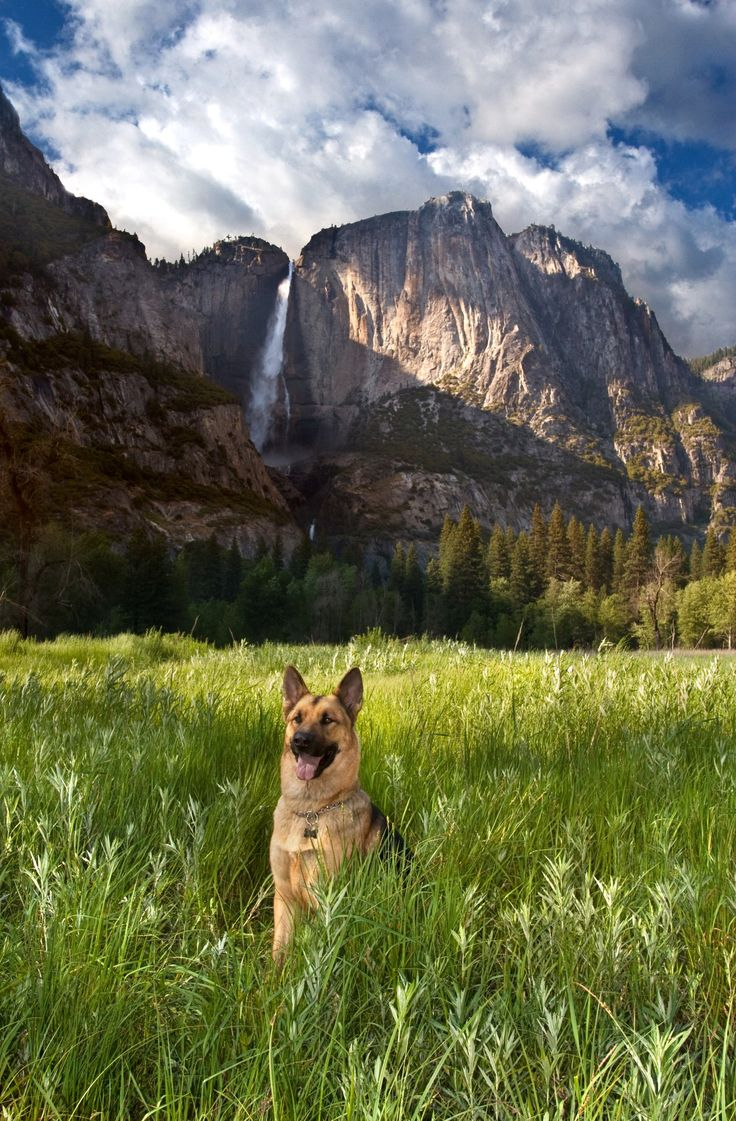 "German Shepherd       ""So yeah, this is my field, and those are my mountains, and that's my waterfall back there."""