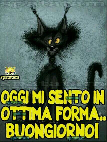 Buongiorno buongiorno pinterest humor and einstein for Immagini divertenti buongiorno venerdi