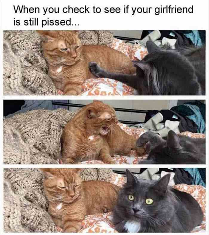 FUNNY ANIMAL PICTURES OF THE DAY – 20 PICS (64)
