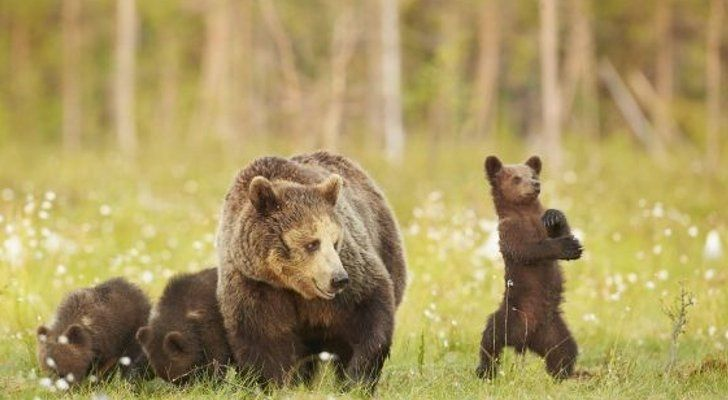 It's been just about enough time for ' Gangnam Style' to have slipped to the back of our minds, but this baby bear isn't having it. Description from pinterest.com. I searched for this on bing.com/images