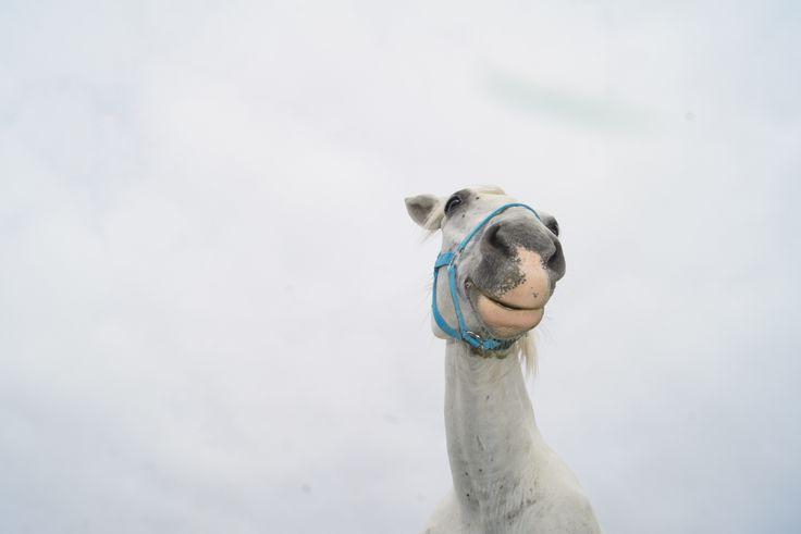 Wizyta wolontariusza w Fundacji Tara - Schronisko dla koni. :)  www.facebook.com/zwierzetaJG   #hourse #koń #tara #schronisko #homeless #bezdomne #animals #zwierzęta
