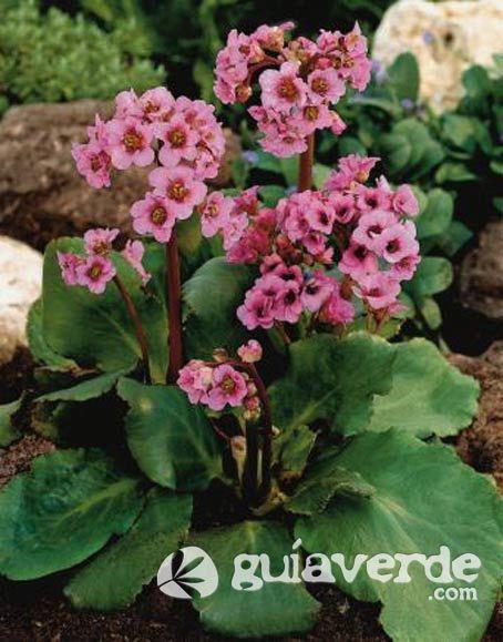 Las 25 mejores ideas sobre hortensias en pinterest jard n hortensia paisajismo con hortensias - Cuidar hortensias exterior ...