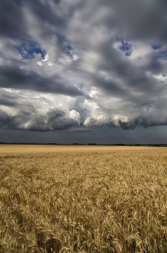 Storm and the Wheat Field (Saskatchewan) by Mark Duffy on 500px