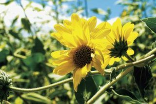 The Best Perennials for a Utah Climate | eHow
