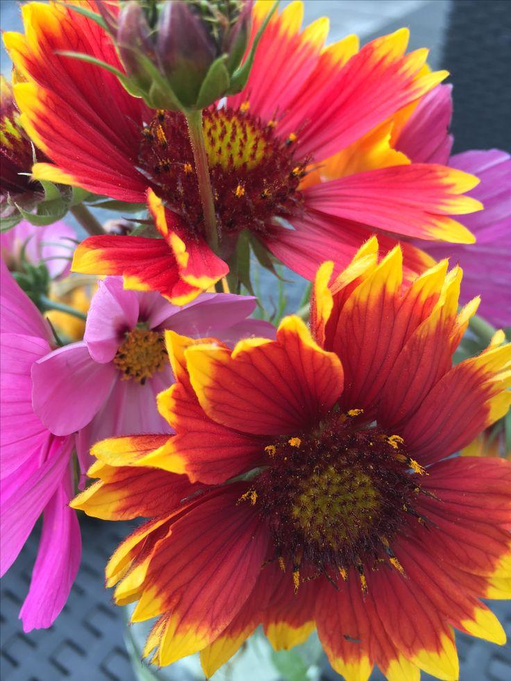 Ouddorp wilde bloemen langs de weg bij camping de Kleppestee .