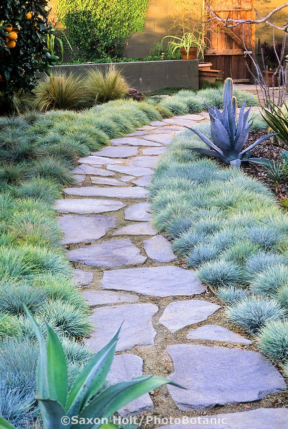 Flagstone path in small backyard garden with orange tree, cactus and bunch grass lawn
