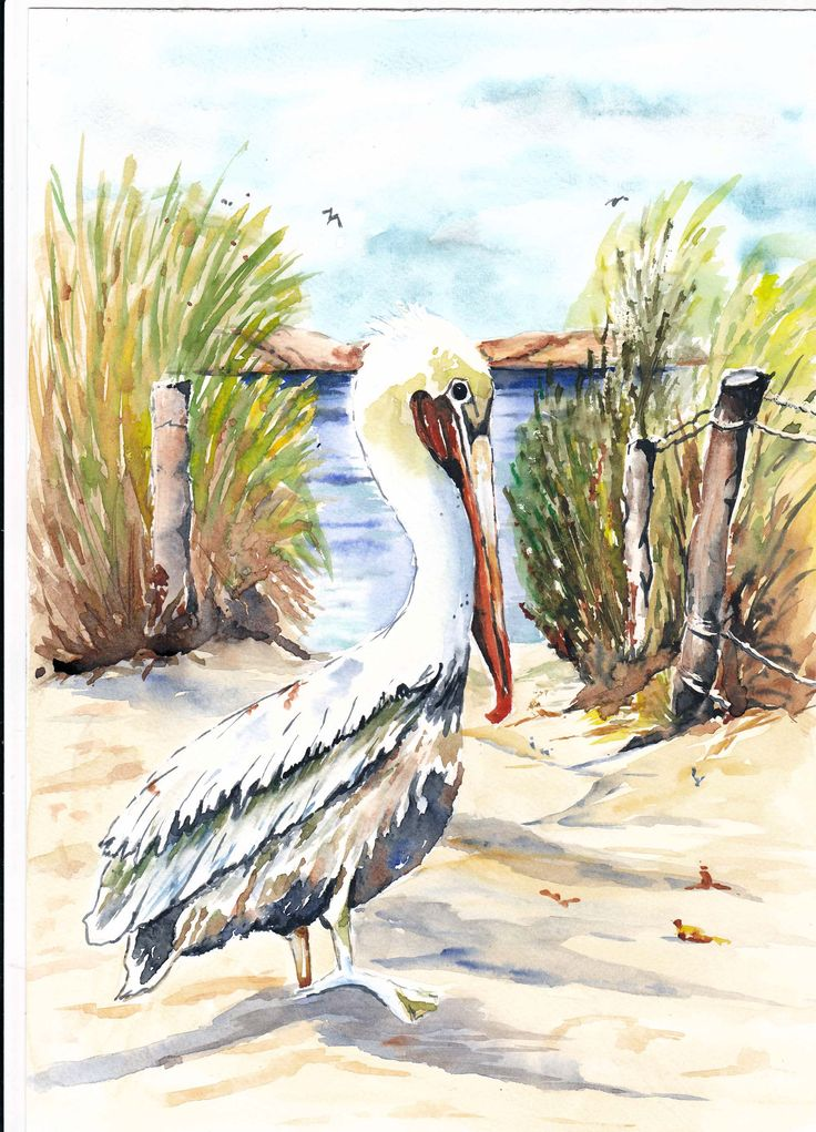 My watercolour painting of an Pelican. This painting is for sale