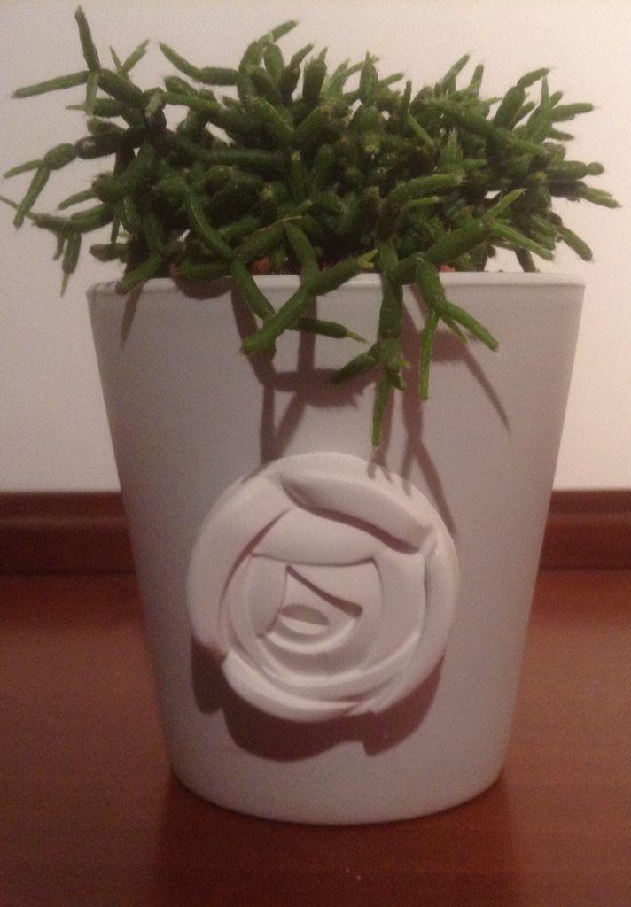 vasetto decorato con gessetto e piantina grassa