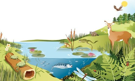 picture of a lake with animals   pond ecosystem in science ...